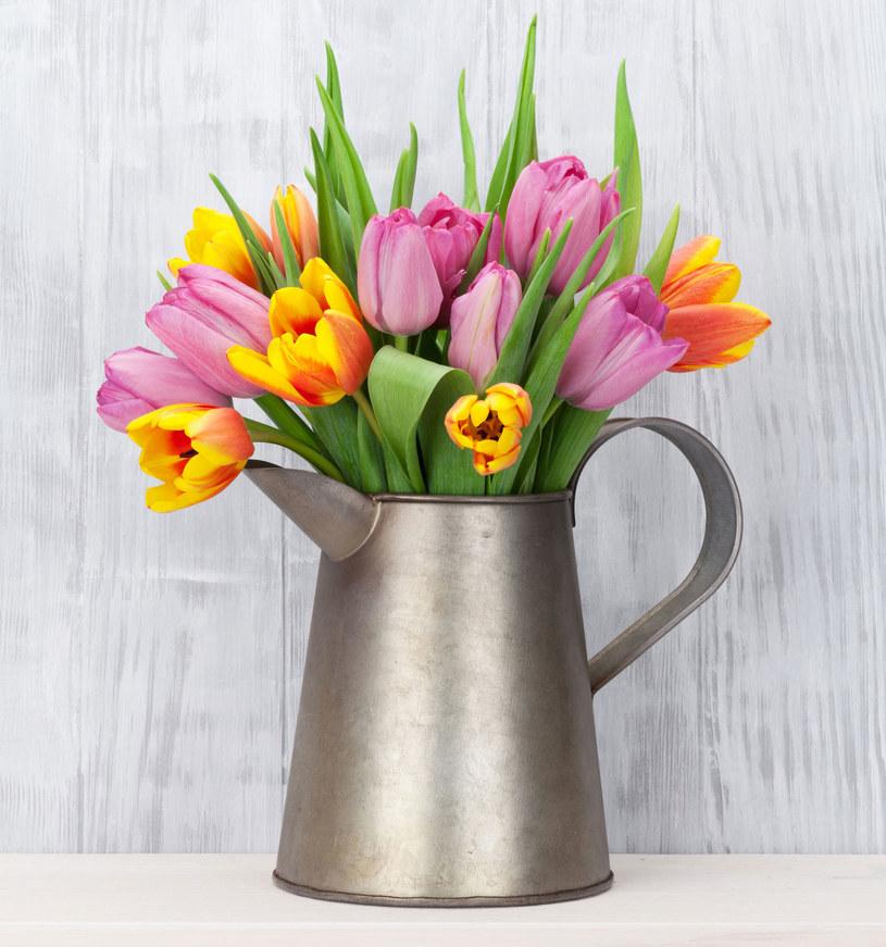 Jeżeli się z kimś przyjaźnisz, różowy tulipan będzie dobrym wyborem /Picsel