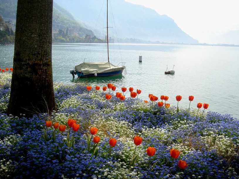Jezioro Genewskie /123RF/PICSEL