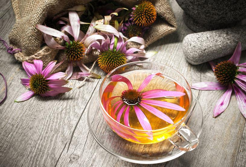 Jeżówka purpurowa /©123RF/PICSEL