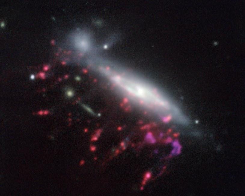 JO204 - jedna z galaktyk meduzowatych zaobserwowanych przez VLT /materiały prasowe