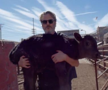 Joaquin Phoenix uratował krowę i cielę z rzeźni