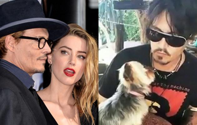 Johnny Depp i Amber Heard szmuglowali psy? /Kevin Winter/Fakty TVN /Getty Images