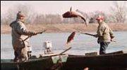 Jugosławia: Skażony Dunaj