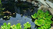 Już dziś stwórz własny perfekcyjny ogród!