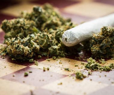 Już mała dawka marihuany zmienia mózg nastolatka