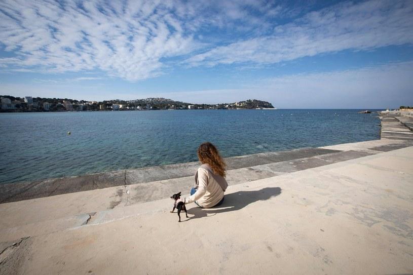 Już w ponad 40 proc. hiszpańskich gospodarstw domowych jest czworonożny pupil. /Jaime Reina /AFP