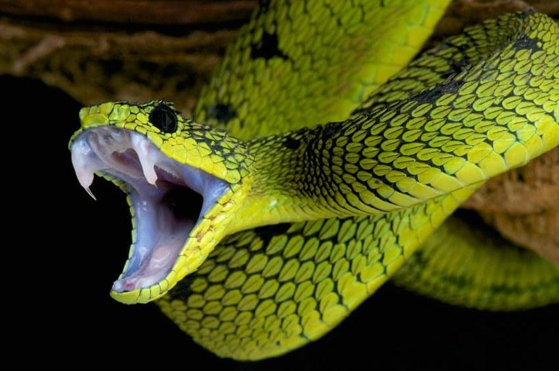 Już wiadomo, dlaczego węże nie mają kończyn /123RF/PICSEL