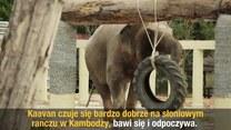 """Kaavan, """"najbardziej samotny słoń świata"""", na wymarzonej emeryturze"""