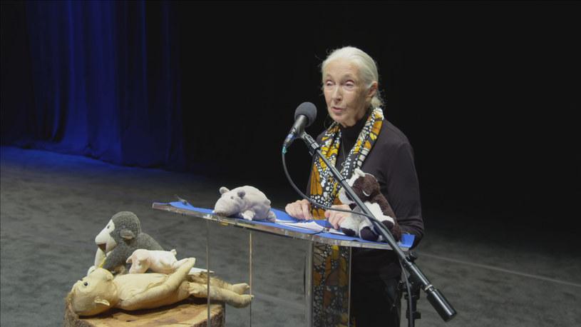 """Kadr z filmu """"Jane Goodall: nadzieja na przyszłość"""" /materiały prasowe"""