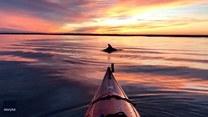 Kajakarz w towarzystwie delfina podziwia zachód słońca