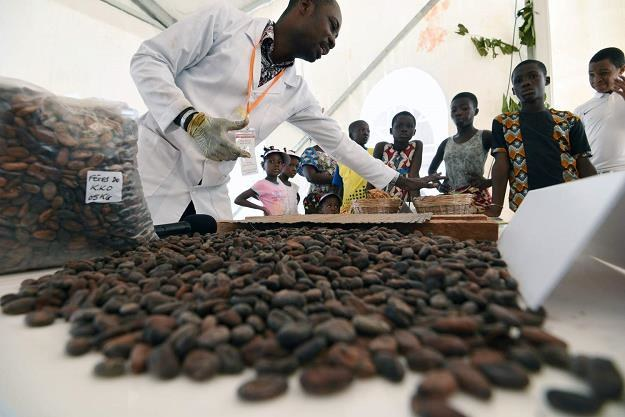 Kakao z Wybrzeża Kości Słoniowej /AFP