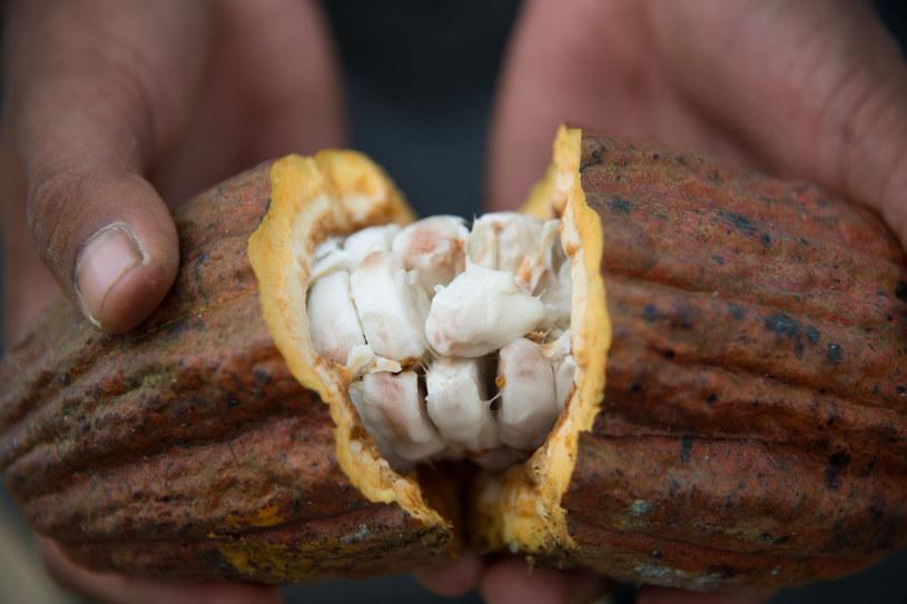 Kakao zawiera przeszło 800 związków korzystnych dla naszego zdrowia /123RF/PICSEL