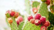 Kaktus - magiczny składnik w pielęgnacji skóry