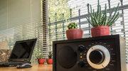 Kaktus przy komputerze