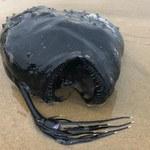 Kalifornia: Ocean wyrzucił na brzeg coś przerażającego