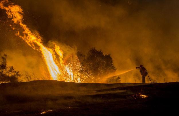 """Kalifornia """"zamieniła się w beczkę prochu"""" fot. Josh Edelson /AFP"""