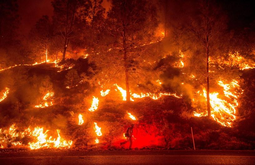 """Kalifornia zmaga się z pożarami i wielką suszą. """"Beczka prochu"""" /PAP/EPA"""