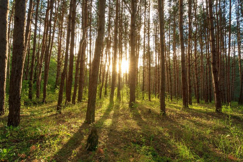 Kampania Lasów Państwowych zachęca do regularnych leśnych wycieczek /123RF/PICSEL