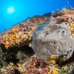 Kanada: Pozostałości gąbek liczą 890 mln lat. To rekord