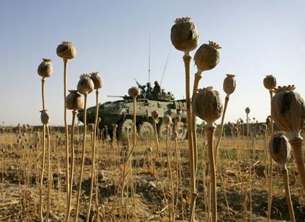 Kanadyjczycy z ISAF na jednym z opiumowych pól w Afganistanie /Getty Images/Flash Press Media