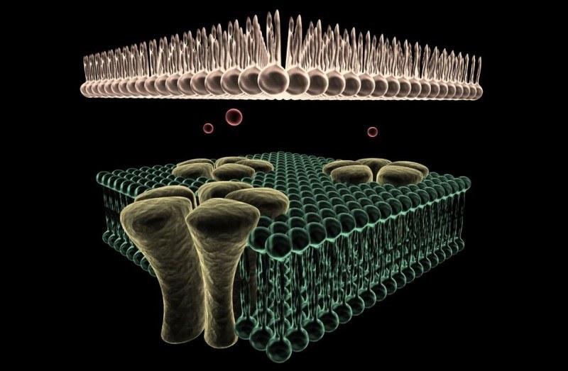 Kanały jonowe w komórce /123RF/PICSEL