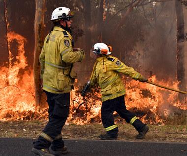 Kangurek Kao zebrał niemal 15 tys. zł na walkę z pożarami w Australii