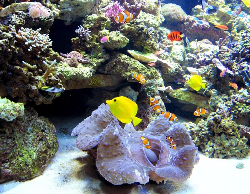 Karaibskie rafy koralowe zanikają w szybkim tempie. /AFP