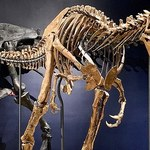 Karłowate tyranozaury to fikcja