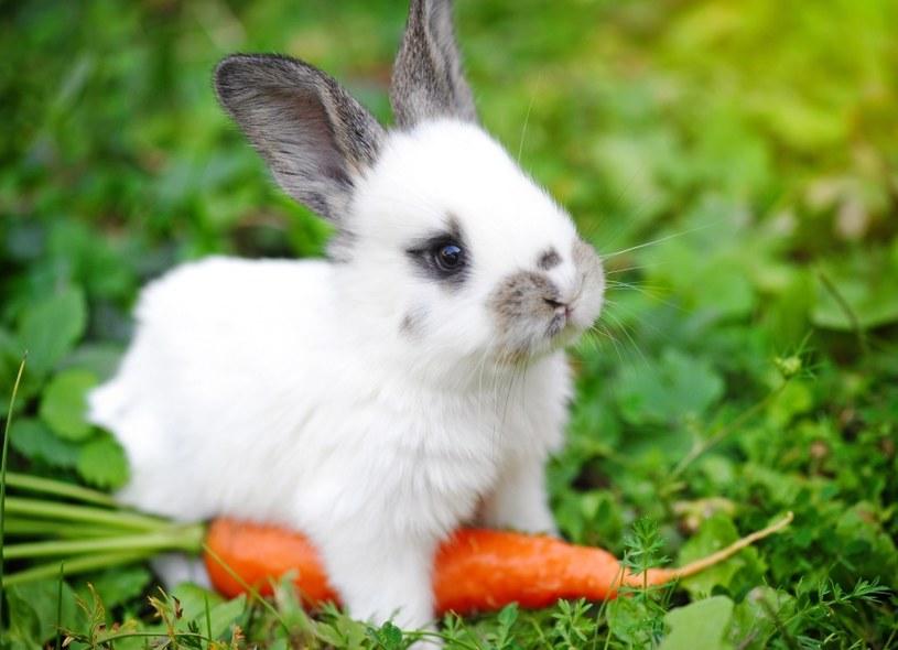 Karm odpowiednio królika /©123RF/PICSEL