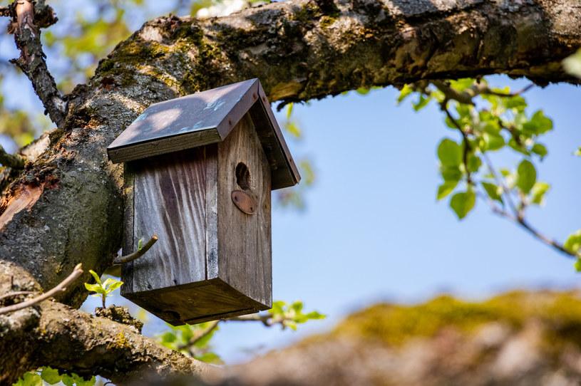 Karmniki stanowią dom dla ptaszków /123RF/PICSEL