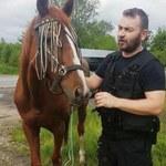 Kasztanka zwiedzała Małopolskę. Biegała po drodze krajowej nr 44