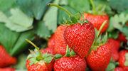 Katarzyna Bosacka o pestycydach w truskawkach