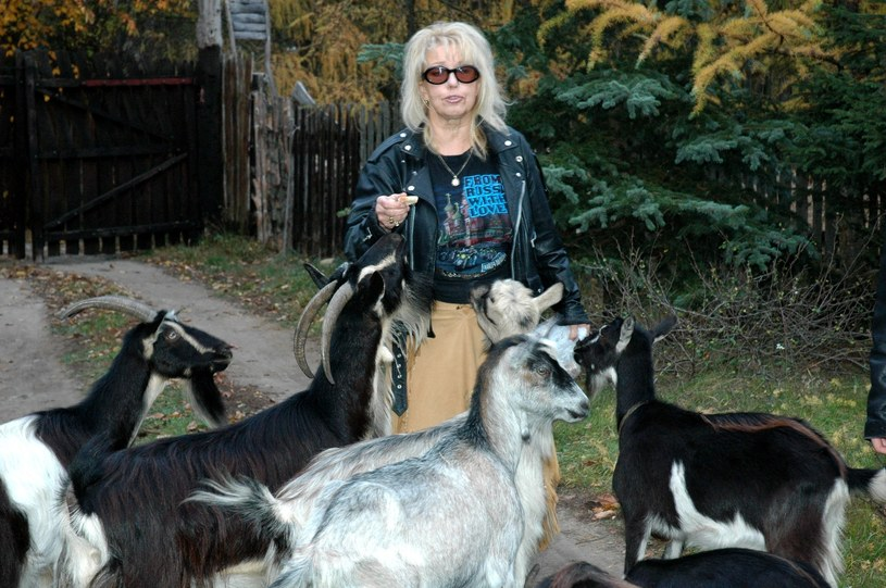 Katarzyna Gaertner z kozami, fot. Marek Gorecki /East News
