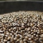 Kawa może pomóc w leczeniu demencji
