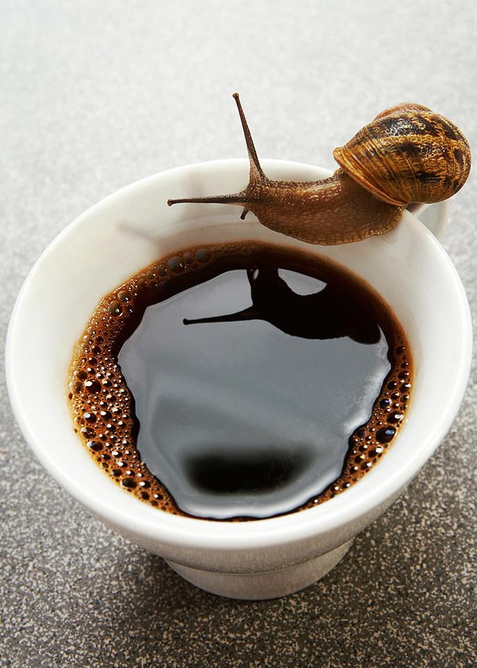 kawa na ślimaki /© Photogenica
