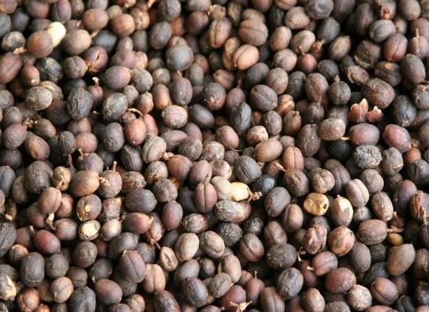 Kawa pochodząca z Kostaryki ma delikatny aromat słodkiej czekolady /123RF/PICSEL