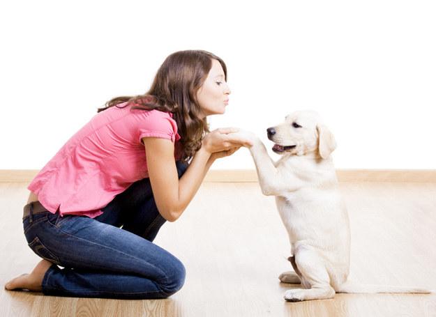 Każdego psa da sie ułożyć /© Panthermedia