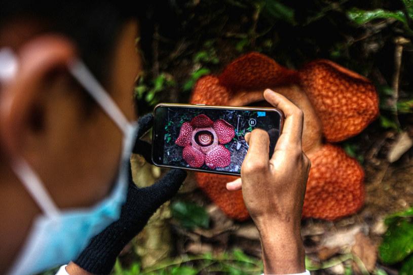 Każdy ekoturysta chce ją zobaczyć na żywo /AA/ABACA/Abaca/East News /East News