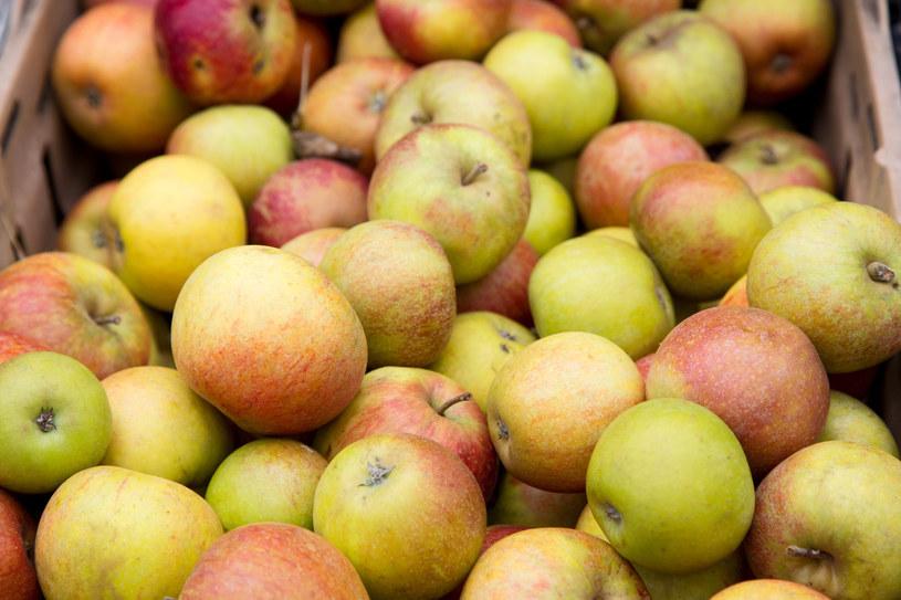 Każdy gatunek jabłka ma nieco inne zastosowanie w kuchni /123RF/PICSEL