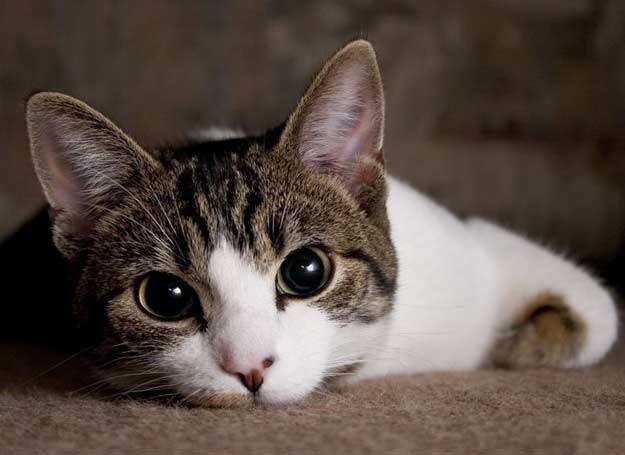 Każdy kot jest super! /123RF/PICSEL