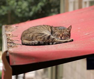"""""""Kedi - sekretne życie kotów"""" [trailer]"""