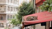 """""""Kedi - Sekretne życie kotów""""  : Wolność kocham i rozumiem"""