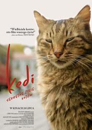 Kedi - sekretne życie kotów