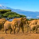 Kenia: Wakacje 2021 a koronawirus. Jakie zasady obowiązują? [Aktualne informacje]