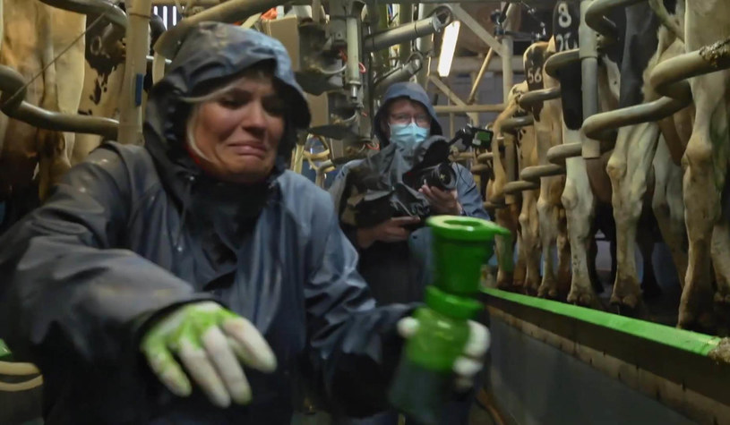 "Kerry Katona w programie ""Celebs on the farm"" /MTV /Agencja FORUM"