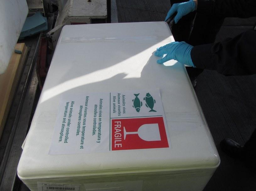 Khoo przewoził nielegalny towar pod warstwą mrożonych ryb /Rex Features /East News