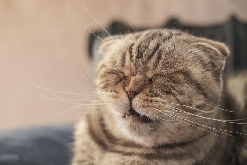 Kichanie u kota może mieć różne przyczyny /123RF/PICSEL