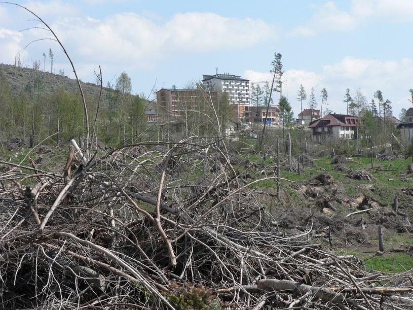 Kiedy kataklizm przycichł, rozpoczęło się liczenie strat. Gołym okiem można było dostrzec, że rozmiar skutków żywiołu jest gigantyczny /Wikimedia Commons /domena publiczna