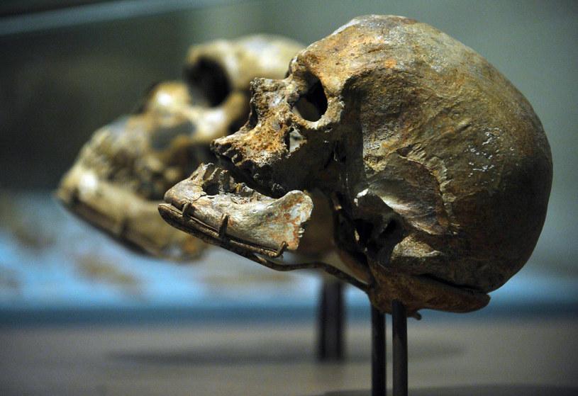 Kiedy wykształcił się język? Być może już u gatunku Homo erectus /AFP