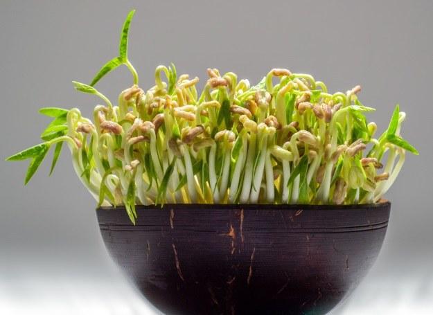 Kiełki fasoli mung z zielonymi listkami /123RF/PICSEL